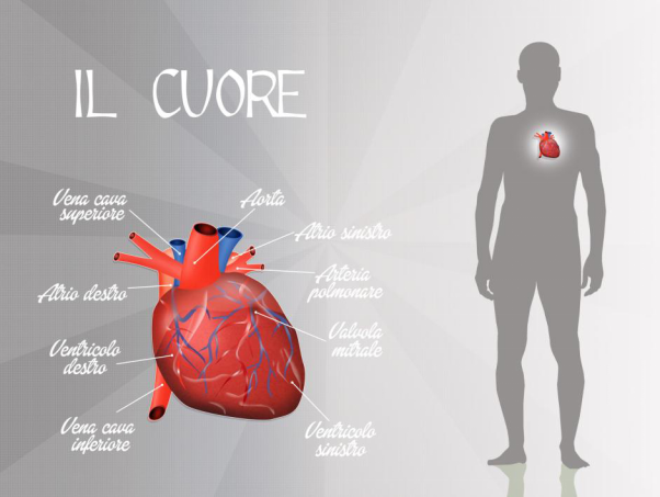 Chiropractic Care and Cardiovascular Disease